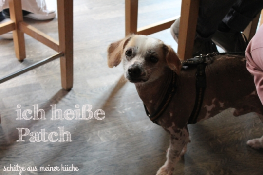 Hund Patch